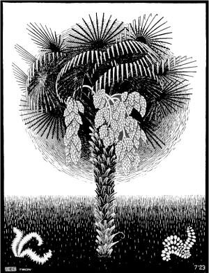 palm-tree escher